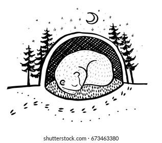 Hibernation Bear HD Stock Images | Shutterstock