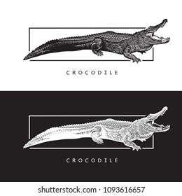 Vector graphic image of American alligator. Black and white illustration of crocodilian reptile, logotype, clip art in engraving style, design element for logo or template.