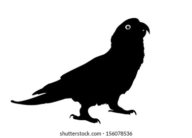 Vector graphic outline of a paradise gold capped conure.