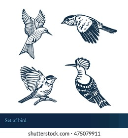 vector graphic set with birds,