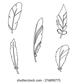 Vector graphic set with feathers