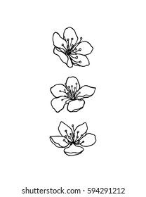 Vector graphic set of hand drawn sakura flowers. Beautiful floral design elements, ink drawing, graceful lines.
