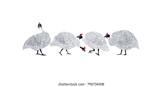 Vector graphic set of hand drawn guinea fowls. Beautiful ink drawing