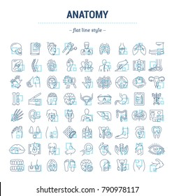 Vector graphic set. Icons in flat, contour, thin, minimal and linear design. Science of anatomy. Study and structure of human internal organs. Concept illustration for Web site. Sign, symbol, element.