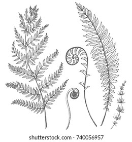 Vector graphic set of illustrations of wild forest plants, leaves and young ferns. sketch illustration