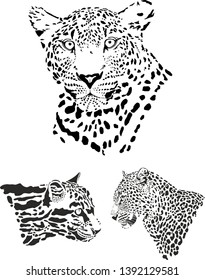 vector graphics of leopards heads, front, side and cloud leopard