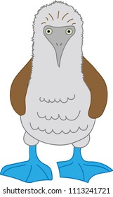 Vector graphics marine bird, blue-footed booby illustration, vector graphics blue-footed booby