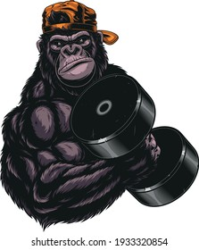 Vector graphics, severe gorilla athlete performs an exercise with dumbbells for biceps, on a white background