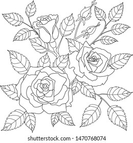 Vector graphics, sketch, coloring of roses, outline of roses, foliage