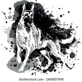 Vector grayscale illustration of a German Shepherd