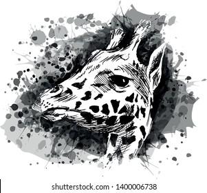 Vector grayscale illustration of a giraffe head