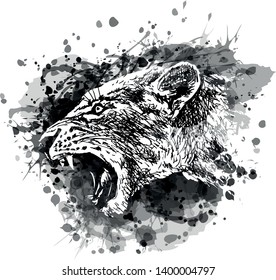 Vector grayscale illustration of a lioness head