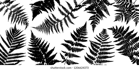 Vector green background with silhouette of fern leaves, botanical illustration, natural floral template