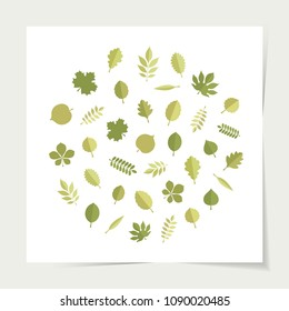 Vector green leaves (elm, beech, ash, linden, birch, alder, aspen, willow, maple,  poplar, rowan, hawthorn, walnut, apple, oak, acacia, chestnut, conker) in form of circle isolated on white background