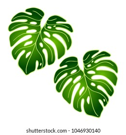 Vector green leaves of tropical plant Monstera isolated on white background. Tropical jungle design nature wallpaper. Design for banner, postcard, poster, textile.