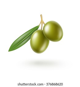 Vector Green Olives Branch with Leaves Isolated on White Background