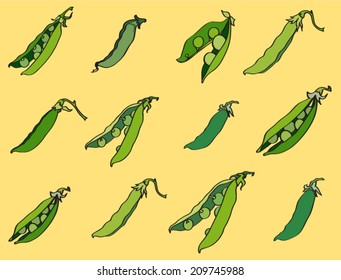 Vector green peas pattern. Illustration of fresh sweet green peas pods.