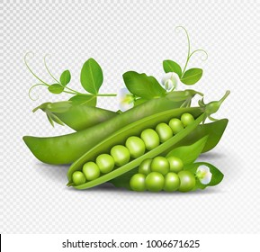 Vector green peas. Photo-realistic vector pods of green peas with leaves and flowers on transparent background. 3d green peas illustration.