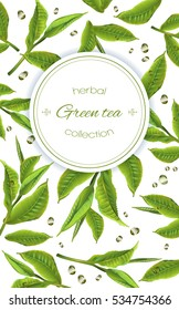 Vector green tea frame with tea leaves and drops on white background. Design for tea packaging, natural cosmetics and health care products. With place for text.