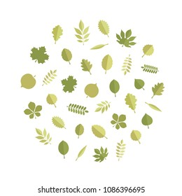 Vector green tree leaves (elm, beech, ash, linden, birch, alder, aspen, willow, maple, poplar, rowan, hawthorn, walnut, apple, oak, acacia, chestnut, conker) in round form isolated on white background