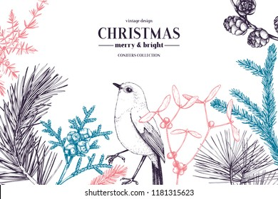 Vector greeting card or invitation design  with hand drawn conifers, holly berries, mistletoe, cones and birds. Holiday decor elements. Vintage Christmas or New Year illustration. Winter template