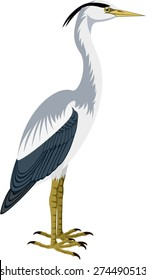 vector Grey Heron