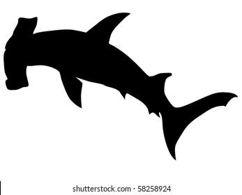 vector  hammerhead shark