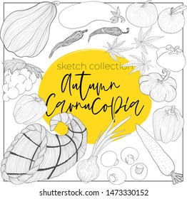 Vector hand draw collection of vegetables and cornucopia in sketch style for harvester autumn festival. Outline illustration of horn of plenty, currots, grape, pumpking, onion, champignon