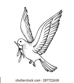 dove sketch images stock photos vectors shutterstock