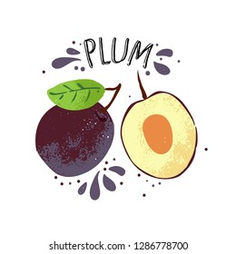 Vector hand draw plum illustration. Violet plums with juice splashes isolated on white background. Textured blue and yelllow plum sketch, juice fruit with word Plum on top. Fresh silhouette fruit of