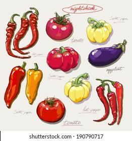 vector hand drawing nightshade vegetables set
