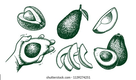 Vector hand drawn avocado set. Whole avocado, sliced pieces, half, leaf and seed sketch. Tropical summer fruit engraved style illustration. Detailed food drawing. Great for label, poster, print doodle