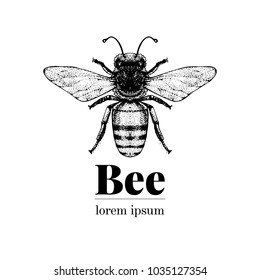 Vector hand drawn bee illustration. Vintage style logo template. Inteligent insect illustration.