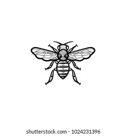 Vector hand drawn bee outline doodle icon. Bee sketch illustration for print, web, mobile and infographics isolated on white background.
