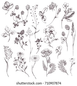 Vector hand drawn big collection with wild and medicinal herbs. Hand drawn botanical sketch with plants and flowers. For print, card, wrapping and other natural herbal design. Ink sketch.