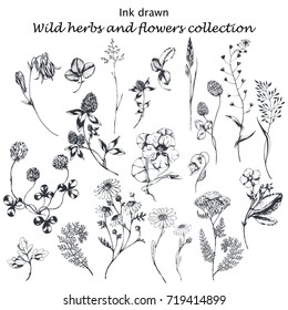 Vector hand drawn big collection with wild and medicinal herbs. Hand drawn botanical sketch with plants and flowers. For print, card, wrapping and other natural herbal design.Ink sketch lack and white
