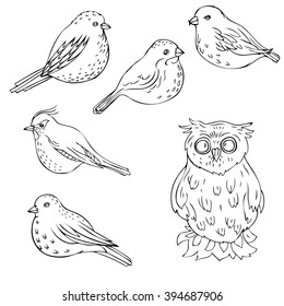 vector hand drawn birds, isolated songbirds and owl,  nature design  elements