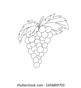 Vector hand drawn Bunch of grapes outline doodle icon. Bunch of grapes on white background for print, web, mobile and infographics. sketch vector illustration isolated