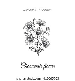 Vector hand drawn camomile flower Illustration. Sketch vintage style. Design template. Retro background.