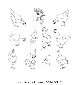 Vector hand drawn chickens set. Animals illustration for poster, farm, restaurant, flyer, menu, card, fabric, polygraphy design.