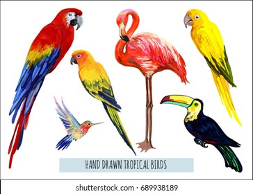 Vector hand drawn collection of beautiful exotic tropical birds. Isolated on white background.