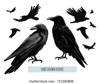 Vector hand drawn collection of beautiful ravens, flying birds. Halloween collection. Isolated on white background.