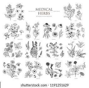 Vector hand drawn collection of medical herbs. Botanical set.Vintage design with herbal flowers illustration. Use for packing, postcard, textiles.