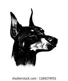 Vector hand drawn doberman dog vintage illustration