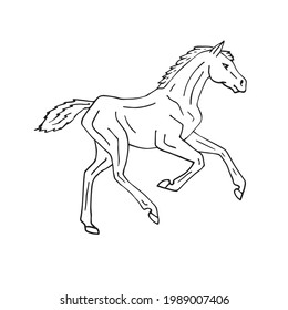 Vector hand drawn doodle sketch horse foal isolated on white background