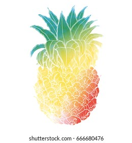 Vector hand drawn doodle and watercolor illustration of pine apple