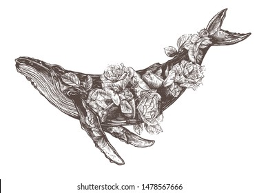 Vector hand drawn double exposure illustration of  humpback whale and roses flowers. Sketch detailed engraving style, creative, magical and surreal idea for tattoo or print
