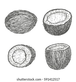 Vector hand drawn elements coconut. Natural tropical food in engraved vintage style illustration. Isolated on white background.