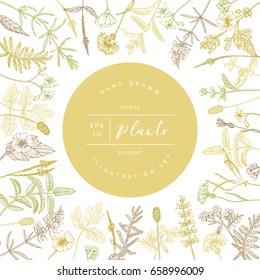 Vector hand drawn floral frame or banner. Elegant hand sketched flower drawing. Vintage hipster herb template for organic natural cosmetics packaging design.