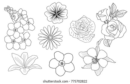 vector hand drawn floral set line art various flowers